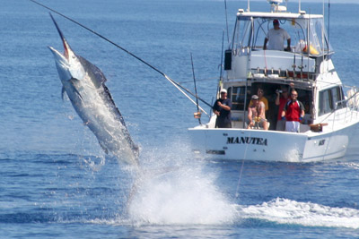 Fishing for Marlin in Australia